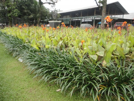 Tumbuhan di Taman Parahyangan Bogor