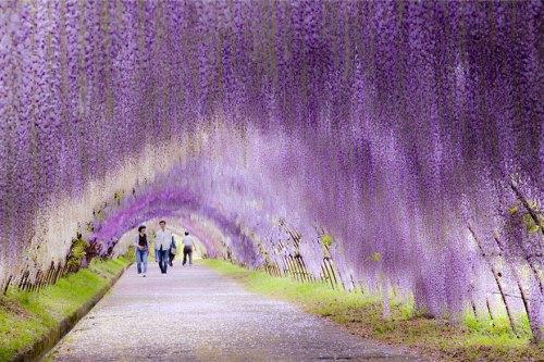 Taman bunga paling indah